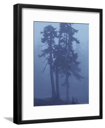 Trees in the Fog-David Boyer-Framed Art Print
