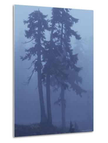 Trees in the Fog-David Boyer-Metal Print