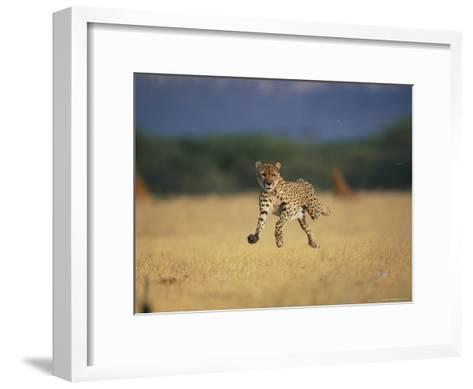 An African Cheetah Caught with All Feet off the Ground in Mid-Sprint-Chris Johns-Framed Art Print