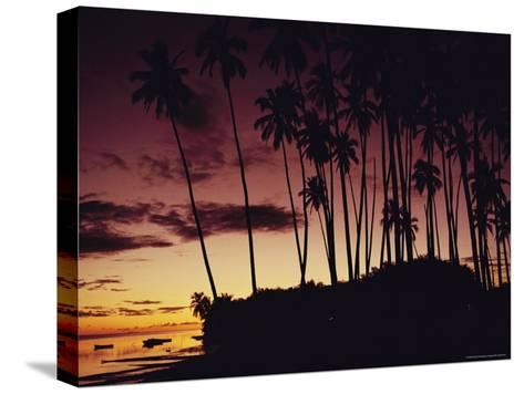 Kapuaiwa Coconut Grove Contains the Last Surviving Royal Coconut Palms--Stretched Canvas Print