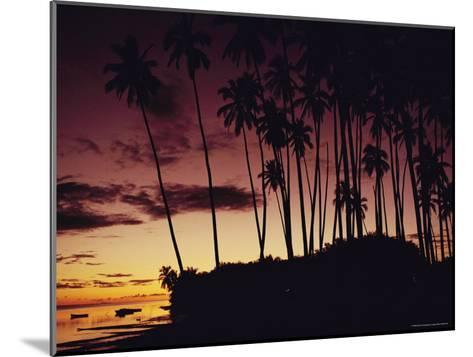 Kapuaiwa Coconut Grove Contains the Last Surviving Royal Coconut Palms--Mounted Photographic Print
