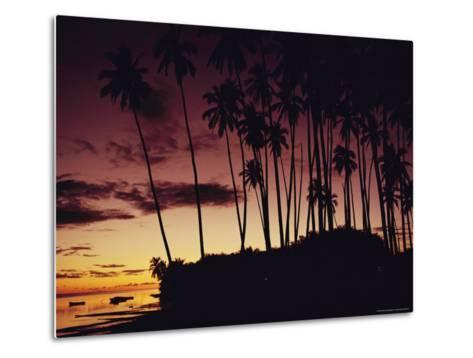 Kapuaiwa Coconut Grove Contains the Last Surviving Royal Coconut Palms--Metal Print