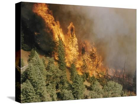 A Forest Fire Casts a Pall of Smoke--Stretched Canvas Print