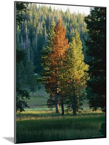 Trees Bearing the Colors of Fall--Mounted Photographic Print