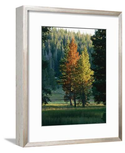 Trees Bearing the Colors of Fall--Framed Art Print