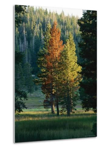 Trees Bearing the Colors of Fall--Metal Print