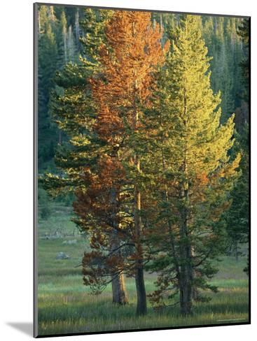 Trees Bearing the Colors of Fall-Raymond Gehman-Mounted Photographic Print