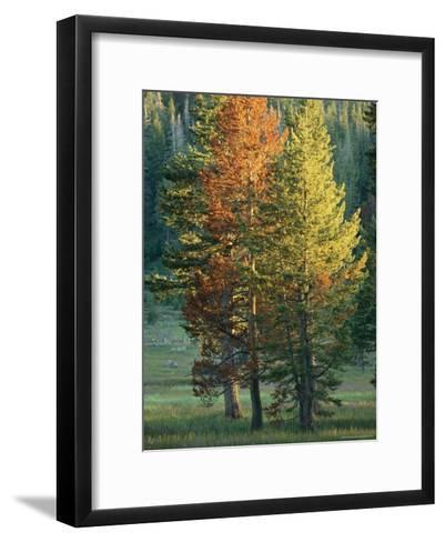 Trees Bearing the Colors of Fall-Raymond Gehman-Framed Art Print