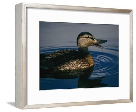 A Duck Swims in the Marshes of the Meadowlands-Melissa Farlow-Framed Art Print