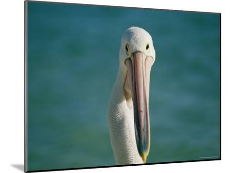 A Portrait of a Pelican at Monkey Mia on Shark Bay--Mounted Photographic Print