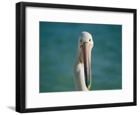 A Portrait of a Pelican at Monkey Mia on Shark Bay--Framed Art Print
