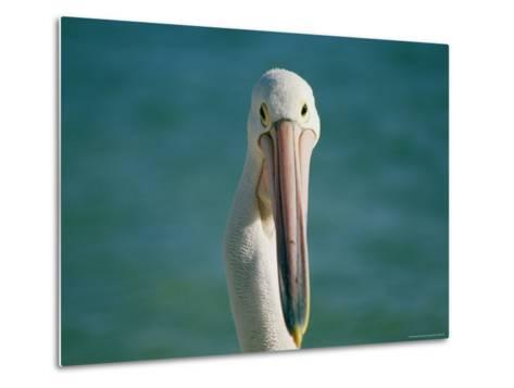 A Portrait of a Pelican at Monkey Mia on Shark Bay--Metal Print