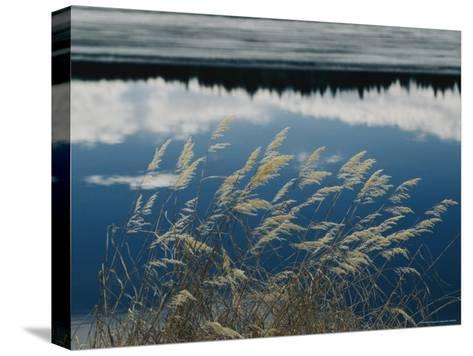 A Clump of Grasses is Framed by Reflections of Sky and Trees in the Lake-Raymond Gehman-Stretched Canvas Print