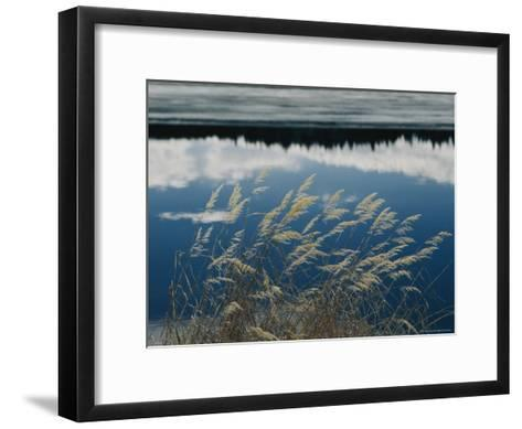 A Clump of Grasses is Framed by Reflections of Sky and Trees in the Lake-Raymond Gehman-Framed Art Print