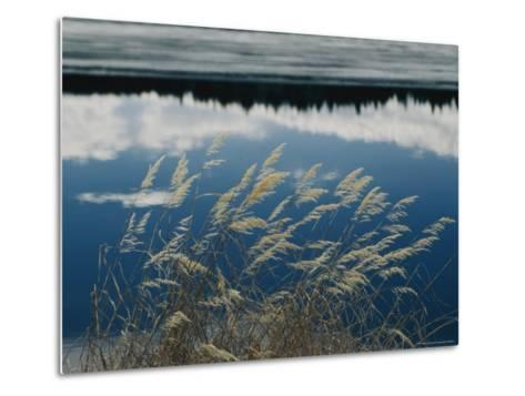 A Clump of Grasses is Framed by Reflections of Sky and Trees in the Lake-Raymond Gehman-Metal Print