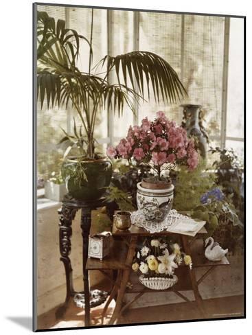Flower Arrangement-Maynard Owen Williams-Mounted Photographic Print