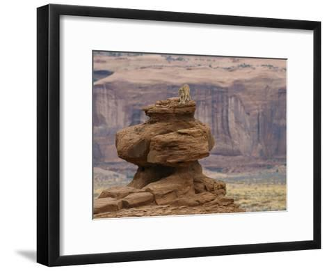 A Mountain Lion Walks Atop a Circular Rock Formation-Norbert Rosing-Framed Art Print
