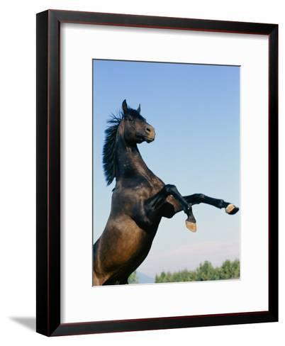 Rearing Horse-James L^ Stanfield-Framed Art Print