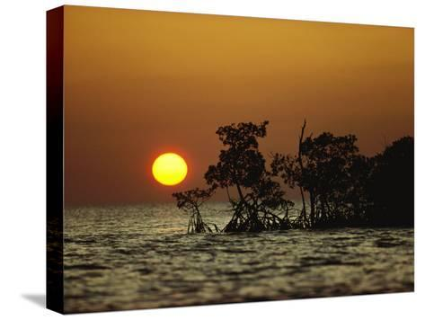 Sunrise in Everglades National Park, Florida-James P^ Blair-Stretched Canvas Print