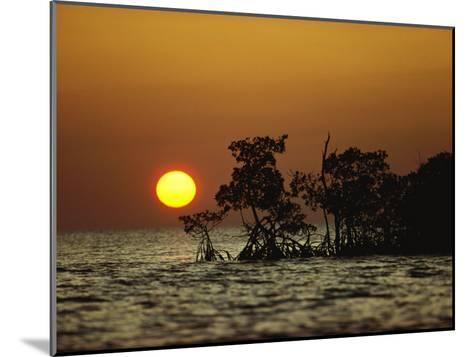 Sunrise in Everglades National Park, Florida-James P^ Blair-Mounted Photographic Print