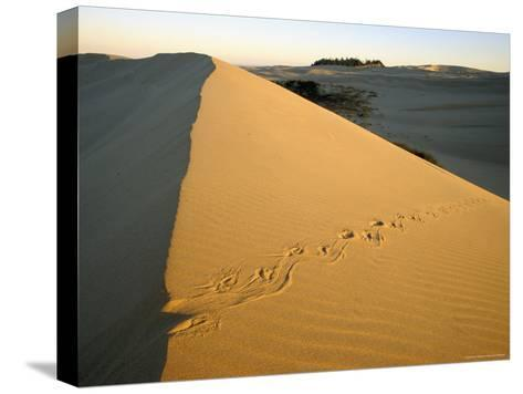 Animal Tracks in the Sand at Oregon Dunes--Stretched Canvas Print
