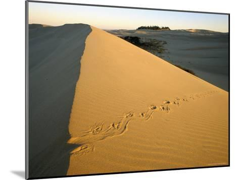 Animal Tracks in the Sand at Oregon Dunes--Mounted Photographic Print