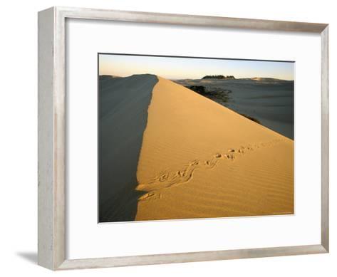 Animal Tracks in the Sand at Oregon Dunes--Framed Art Print