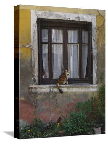 A Cat Sitting on an Exterior Window Sill in Tournus-Todd Gipstein-Stretched Canvas Print