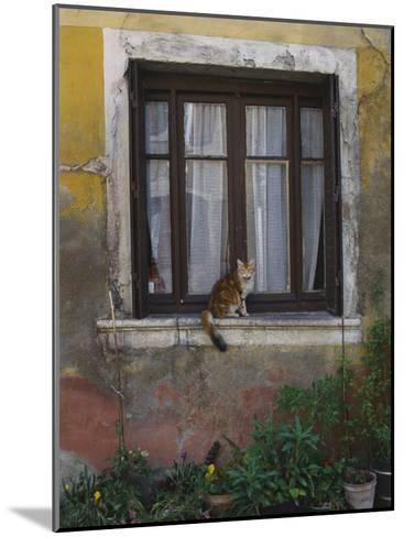 A Cat Sitting on an Exterior Window Sill in Tournus-Todd Gipstein-Mounted Photographic Print