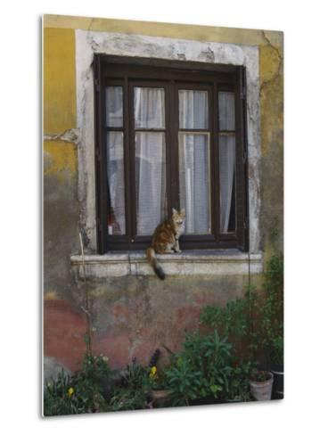 A Cat Sitting on an Exterior Window Sill in Tournus-Todd Gipstein-Metal Print