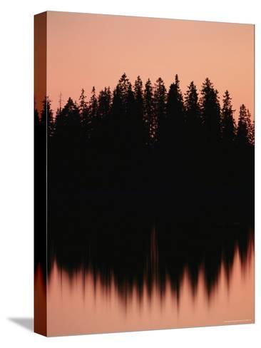 Massed Dark Evergreens Beneath a Rosy Sky Reflected in a Lake-Mattias Klum-Stretched Canvas Print