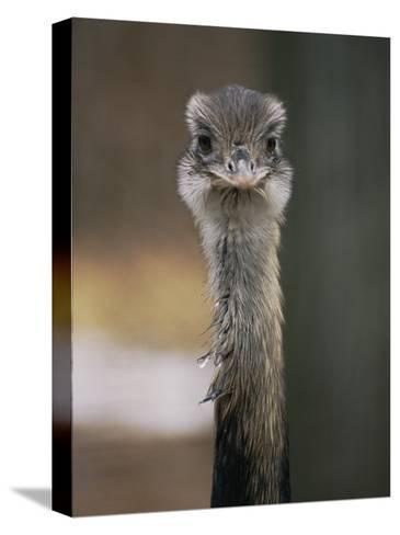 Emu at the National Zoo-Vlad Kharitonov-Stretched Canvas Print