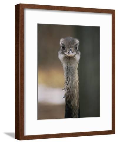 Emu at the National Zoo-Vlad Kharitonov-Framed Art Print