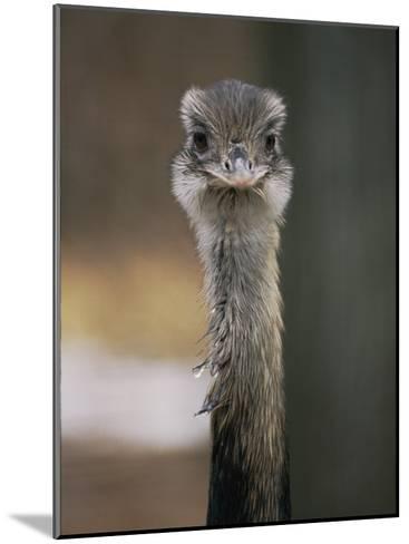 Emu at the National Zoo-Vlad Kharitonov-Mounted Photographic Print