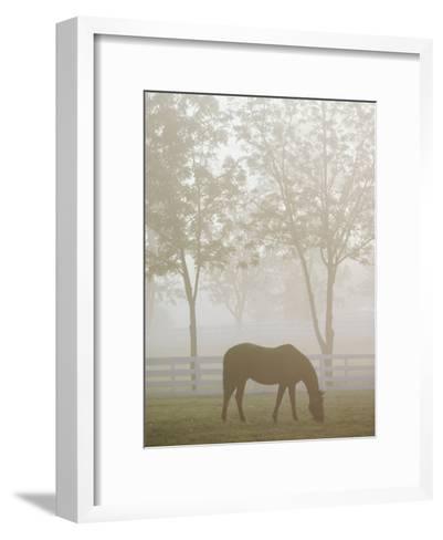 A Thoroughbred Gelding Crops the Bluegrass at the Kentucky Horse Park-Raymond Gehman-Framed Art Print