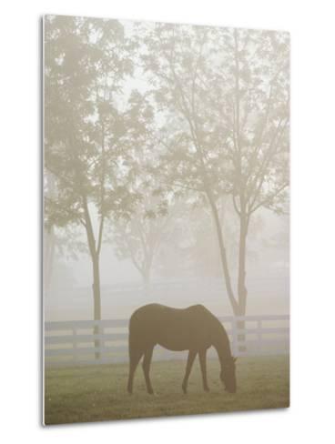 A Thoroughbred Gelding Crops the Bluegrass at the Kentucky Horse Park-Raymond Gehman-Metal Print