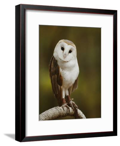 A Snowy-Faced Barn Owl is One of the Wildlife Exhibits at the Nature Station-Raymond Gehman-Framed Art Print