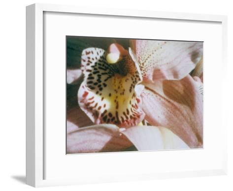A Close View of a Flower-Sisse Brimberg-Framed Art Print