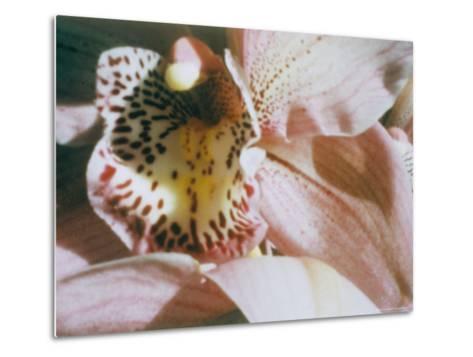 A Close View of a Flower-Sisse Brimberg-Metal Print