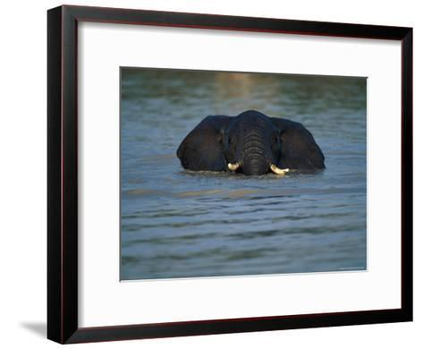 African Elephant Wading in the Water-Beverly Joubert-Framed Art Print