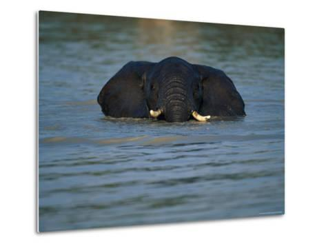 African Elephant Wading in the Water-Beverly Joubert-Metal Print