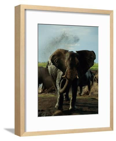 African Elephant Taking a Mud Bath-Beverly Joubert-Framed Art Print