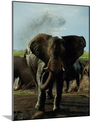 African Elephant Taking a Mud Bath-Beverly Joubert-Mounted Photographic Print