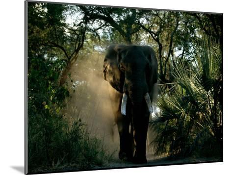 African Elephant in a Forest Setting-Beverly Joubert-Mounted Photographic Print