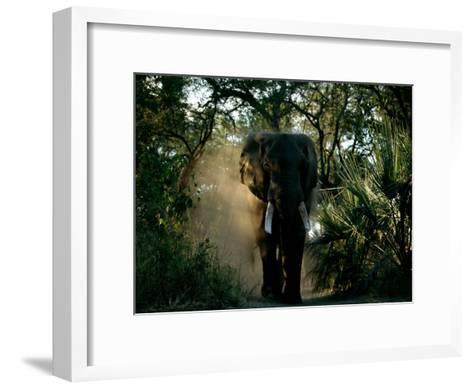 African Elephant in a Forest Setting-Beverly Joubert-Framed Art Print