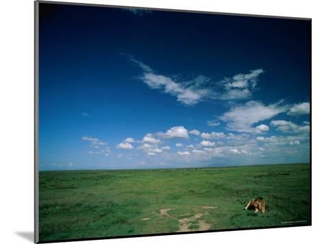 Lion Resting on the Vast Savanna-Beverly Joubert-Mounted Photographic Print