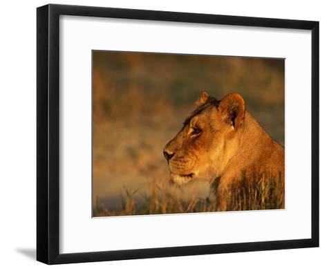 Profile Portrait of an African Lioness-Beverly Joubert-Framed Art Print