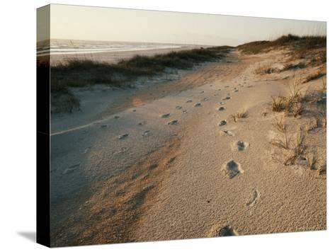 Footprints on the Beach-Walter Meayers Edwards-Stretched Canvas Print