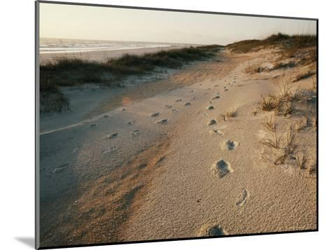 Footprints on the Beach-Walter Meayers Edwards-Mounted Photographic Print