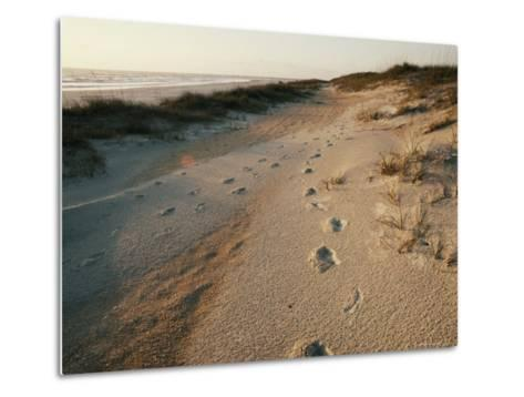 Footprints on the Beach-Walter Meayers Edwards-Metal Print